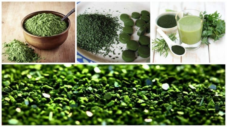 algas-chlorella